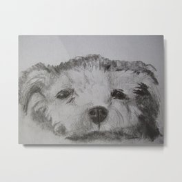 White Highland Terrier Metal Print