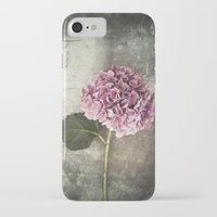 hydrangea iPhone & iPod Cases featuring Hydrangea  by Maria Heyens