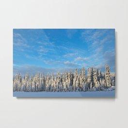 Spruce After Snow Storm Color Metal Print