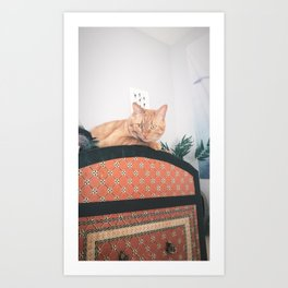Urban Cat Art Print