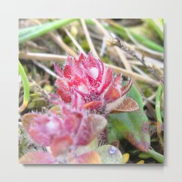 Watercolor Flower, Thrift 02, Northern Iceland Metal Print