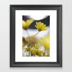 yellow daisies Framed Art Print