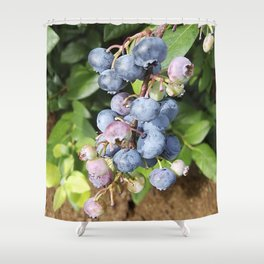 Ready to pick blueberries? Shower Curtain