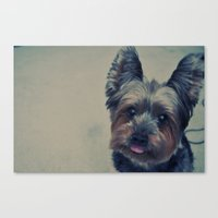 yorkie Canvas Prints featuring yorkie by michaelchon