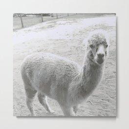 Llama Metal Print