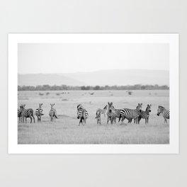 Zebras on The Serengeti Art Print