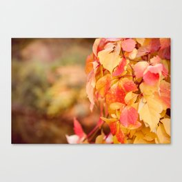 vine red yellow leaves abstract Canvas Print