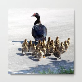 Momma Duck and Babies Metal Print
