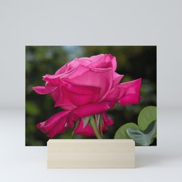 Pink Rose Mini Art Print