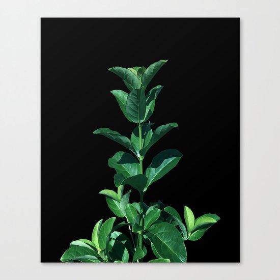 Leaves Viburnum Canvas Print