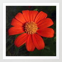 mexican Art Prints featuring Mexican Sunflower by Awesome Palette