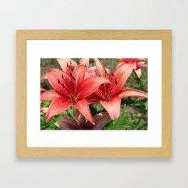 Daylilies Framed Art Print