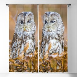 Tawny Owl in woodland Blackout Curtain