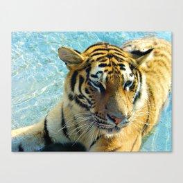 Here kitty, kitty! Canvas Print