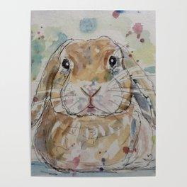 Lop rabbit portrait Poster