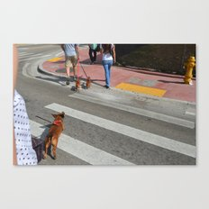 Running Dachshund  Canvas Print