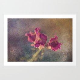 Snapdragon flowers Art Print