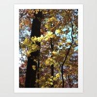 Autumn Light II Art Print
