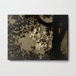 Maple in Sepia Metal Print