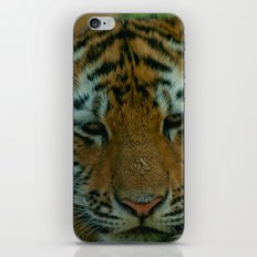Baby Tiger  iPhone & iPod Skin