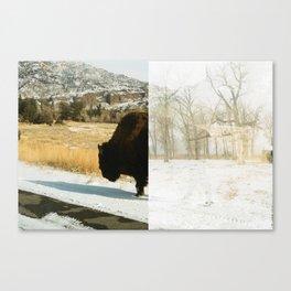 Your Friendly Neighborhood Bison Canvas Print