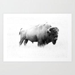 Bison - Monochrome Art Print