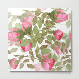 The buds of tender roses on a white background . Retro . Metal Print