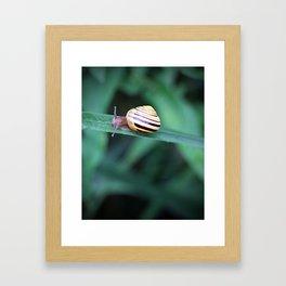 Snail in His Green Jungle Framed Art Print