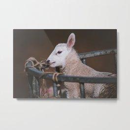 Cute Lamb in a Basket Metal Print