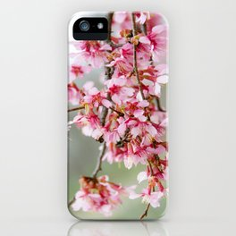 Cherry Blossom-7 iPhone Case