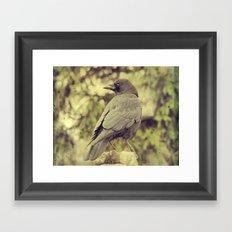Summer Crow Framed Art Print