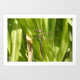 Dragonfy In The Garden Art Print