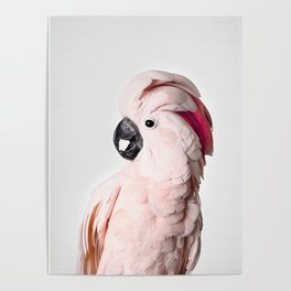 Pink Cockatoo Poster
