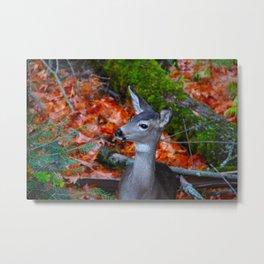 Deer in the Fall Metal Print