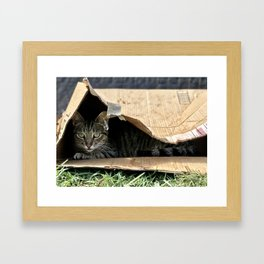 Sad Box Kitty (Lanai Cat's Sanctuary) Framed Art Print