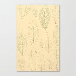 Ex. A Canvas Print