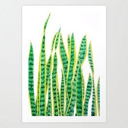 snake plant Art Print