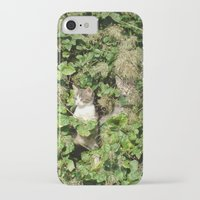 kittens iPhone & iPod Cases featuring kittens by death above