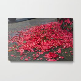 Pink Petals - Seattle, WA Metal Print