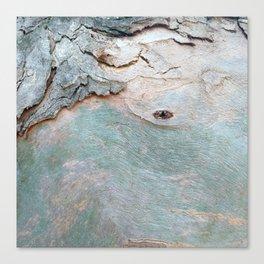 Eucalyptus tree bark texture 11 Canvas Print
