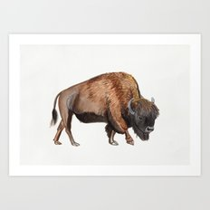 Little Watercolour Bison Drawing Art Print
