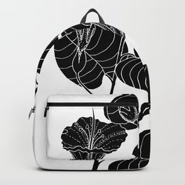Bush Potato (Also known as Desert Yam) - Ipomoea costata Backpack