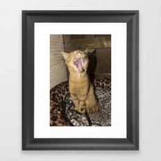 Kitty Yawn Framed Art Print