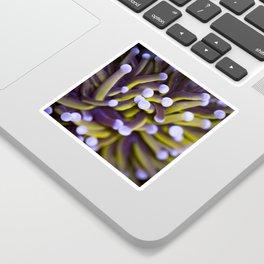 Coral Euphylia Golden Torch Sticker