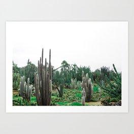 Cactusinafield Art Print