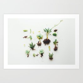 To The Roots (Color) Art Print