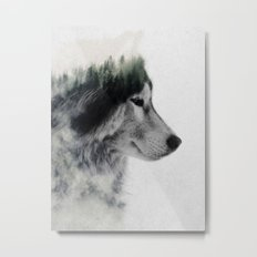 Wolf Stare Metal Print