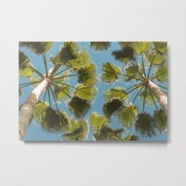 Palm tree Palmera Metal Print