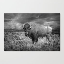 American Buffalo Bison in Yellowstone National Park in Montana a Black and White Version 35863 Canvas Print
