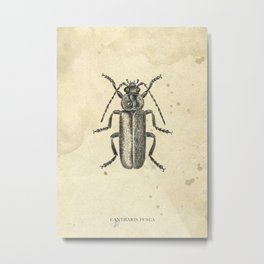 Beetle drawing Metal Print